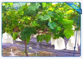 enviro vegetable garden weed barrier