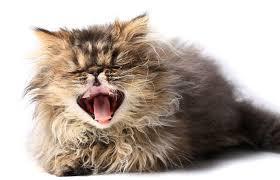 why is my kitten sneezing vet
