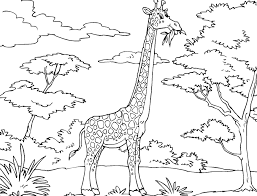 Small Picture Giraffe Coloring Page Pictures Printable Giraffe Pages adult