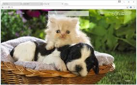 kittens and puppies wallpaper. Modren Puppies Overview I Love Kittens U0026 Puppies  For Kittens And Puppies Wallpaper