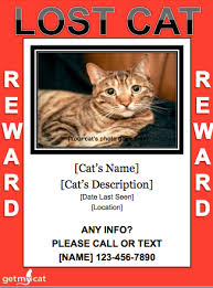Lost Pet Flyer Maker Best Lost Cat Tips LOST FOUND PETS WA STATE