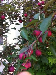 Fruit Trees Michigan  Home Design InspirationsFruit Trees In Michigan