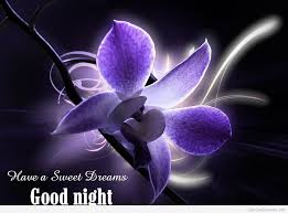 Good Nite Sweet Dreams Quotes Best of Good Night Quotes And Sweet Dreams Images For A Good Sleep