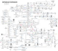 Metabolic Pathways Chart File Human Metabolism Pathways Jpg Wikimedia Commons