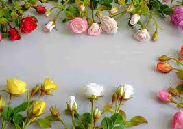 from pickupflowers flower expert