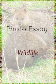 wildlife conservation essays  here is your essay on wildlife conservation preserve articles