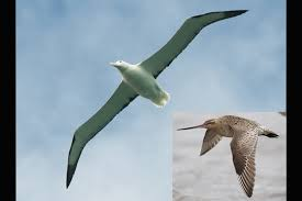How Birds Fly Science Learning Hub