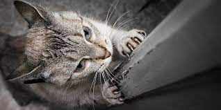 Scratching On Furniture And Carpets International Cat Care