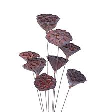 LIOOBO Dried <b>Plant</b> Stems <b>Natural</b> Mini Lotus Pod <b>Dried Flowers</b>