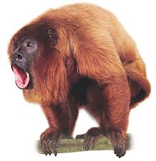 howler monkey drawing. information about howler monkeys from the dk find out website for kids. improve your knowledge on monkey sounds and learn more with out. drawing
