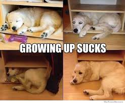 Growing Up Sucks | WeKnowMemes via Relatably.com
