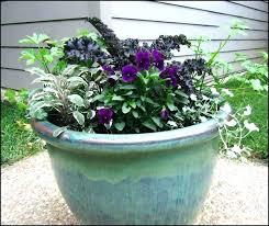 outdoor winter plants for pots outdoor winter plants container garden winter outdoor plants home depot outdoor