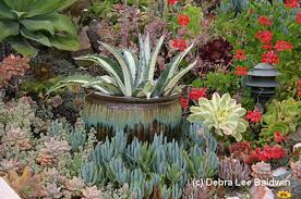 Small Picture Succulent Garden Designs waternomicsus