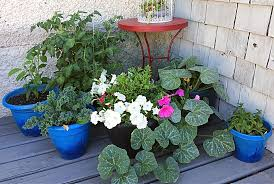 do you dream of having a container vegetable garden on your patio balcony or