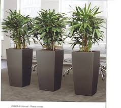 office indoor plants. Low Maintenance Office Plants. Indoor Plants C