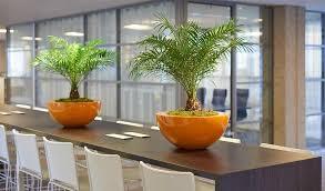 office orange. Indoor Office Plants In Large Orange Planters