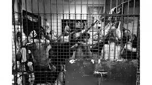 duterte s dirty war a trip to the reveals the human  prisoners in the holding cells at tondo police station manila photo by dave tacon