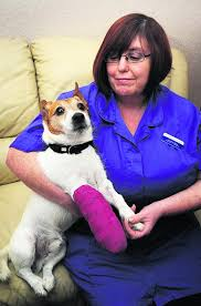 Woman thanks 'mystery man' who saved her dog | Oxford Mail