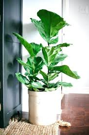 Tropical office plants Low Maintenance Terrific Tropical House Plants House Plants For Sale Fake Office Inspirational Tropical Jungle Gardens Office Spaces Interiors Terrific Tropical House Plants House Plants For Sale Fake Office
