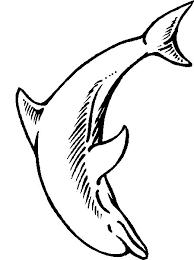 Kleurplaat Mandala Dolfijn Kleurplaat Dolfijn Afb 27233