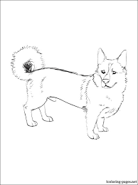 Swedish Vallhund Coloring Page Coloring Pages
