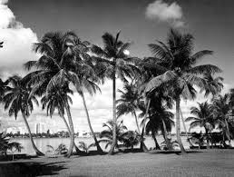 palm trees along lake worth with west beach in background beach florida palm tumblr black and white a60 and