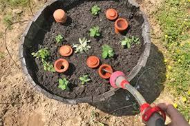 garden irrigation 101 ollas soaker