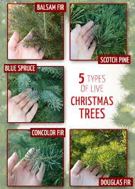 Types Of Christmas Trees  Interior Office PlantsTypes Of Fir Christmas Trees