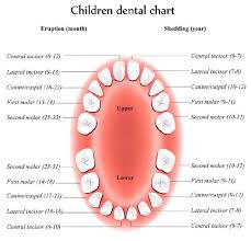 Which Baby Teeth Fall Out Chart When The Timing Of Losing Baby Teeth Becomes An Orthodontic