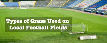 Types of Grass Used on Local Football Fields 784x321jpg