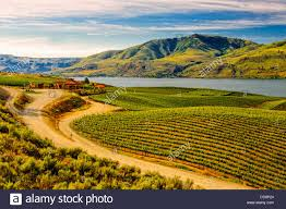 USA, Washington, Lake Chelan. Benson Vineyards Estate Winery is the Stock  Photo - Alamy