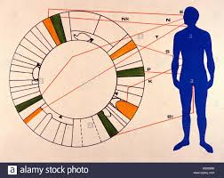 Iridology Guide Chart For Students Relating The Iris Of The