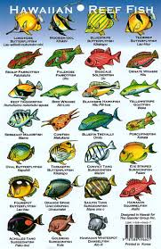 Hawaiian Reef Fish Chart Hawaii Reef Fish Chart The Crazy Thing Is That These