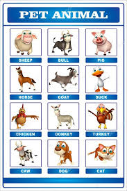 Pet Animal Picture Chart Pet Animal Chart Stock Photo Visible3dscience 102408086