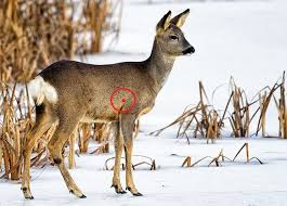 Deer Kill Shot Chart Www Bedowntowndaytona Com