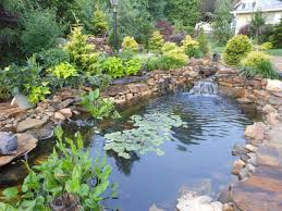Koi Pond Design Back Yard Koi Pond Designs Waterfall Febbceede Amys Office