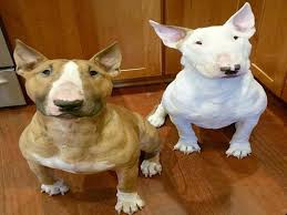 miniature bull terrier mix. Perfect Mix 13 Facts About Bull Terrier That Everyone Should Know  American Bully Daily On Miniature Mix L