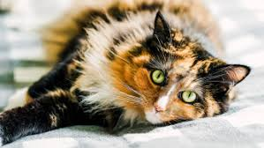 Reasons Why You Should Spay Your Cat | GO! SOLUTIONS