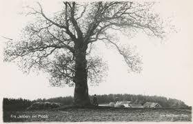 Ramberg (postkort) - Mossebibliotekene / DigitaltMuseum