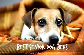 dog incontinence bed. Wonderful Incontinence The Best Senior Dog Beds For Incontinence Bed I