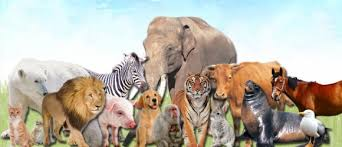 all animals in the world pictures. Interesting The World Animal Day U2013 October 4  And All Animals In The Pictures O