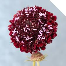 Scabiosa Floral Design Scabiosa Holex Flower Blog