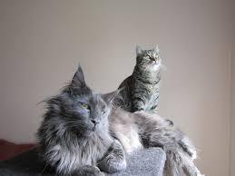 Lustige Katzen Fotos Von Unseren Facebook Fans Geliebte Katze Magazin