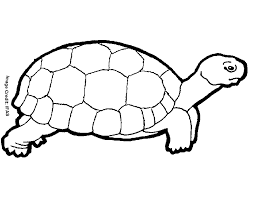 Small Picture Turtle Coloring Pages 16425