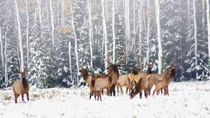 The Ultimate Winter Wildlife Guide: Enjoy and Understand Creatures in the Cold - Cool Green Science