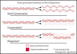 Dna Replication Definition Semiconservative Replication Wikipedia