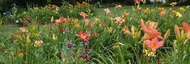 Garden Tracker Garden Tracker For Daylilies A Tool For Hybridizers