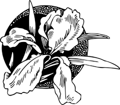 Nelumbo Nucifera Drawing Flower Black And White Free Commercial