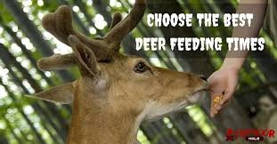 Whitetail Deer Feeding Chart Deer Feeding Times For Their Happy And Healthy Survival