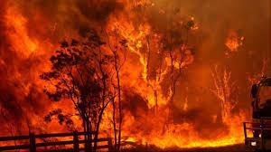 Image result for Australian bushfire photos